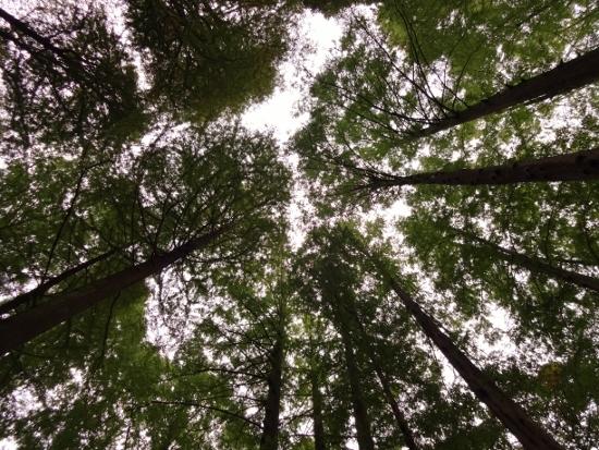 木と空.jpg