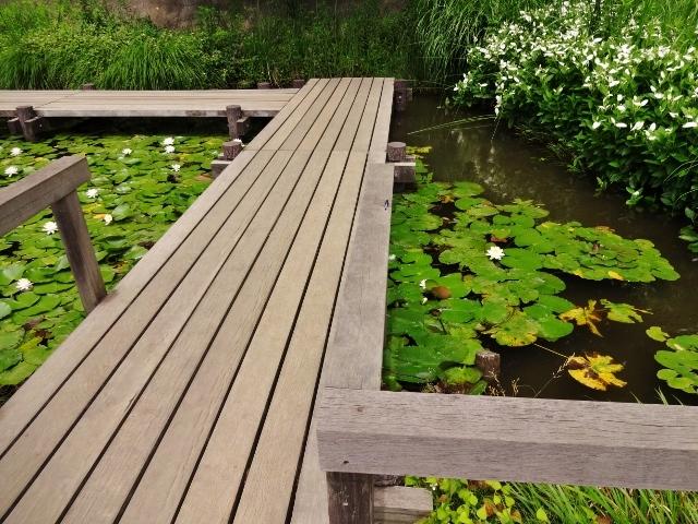 水生植物園.jpg