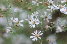 白い花たくさん.jpg