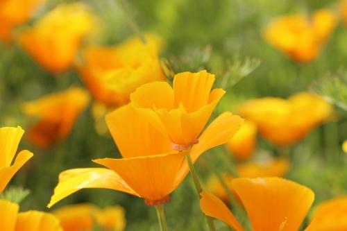 オレンジ3.jpg