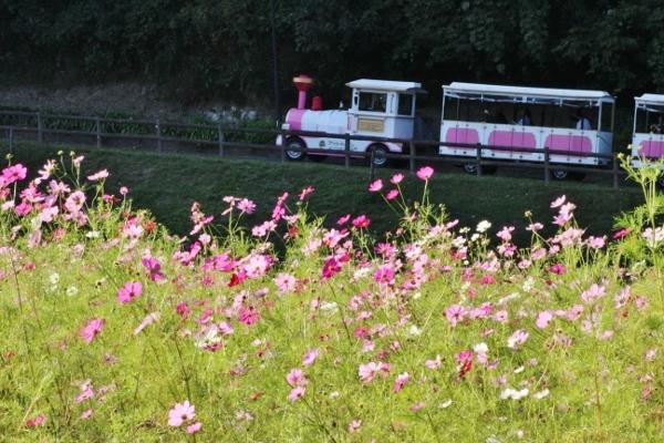 ピンクの電車.jpg