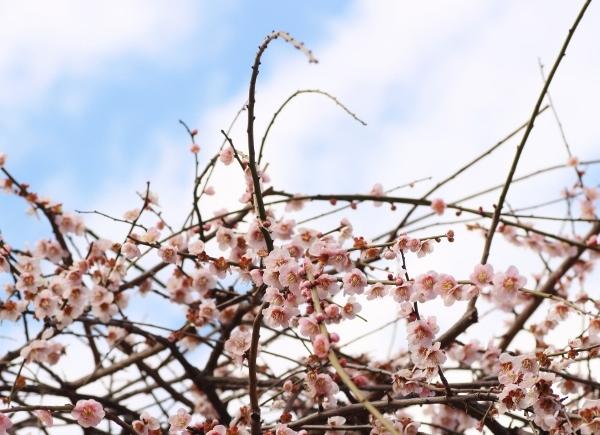 梅と空.jpg